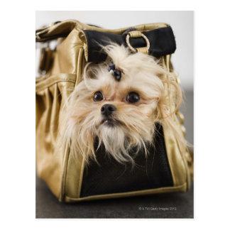 Dog in a purse postcard