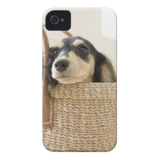 Dog in basket iPhone 4 covers