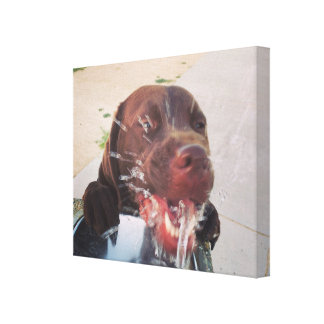 Dog in fountain canvas print
