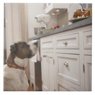 Dog in kitchen looking at food on counter large square tile