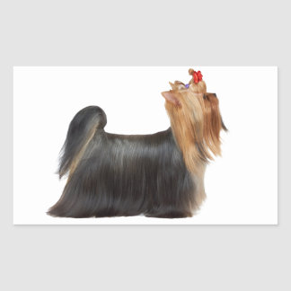 Dog in show rectangular sticker