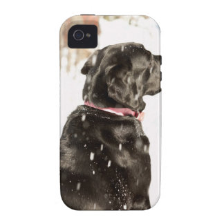 Dog in snow Case-Mate iPhone 4 cases