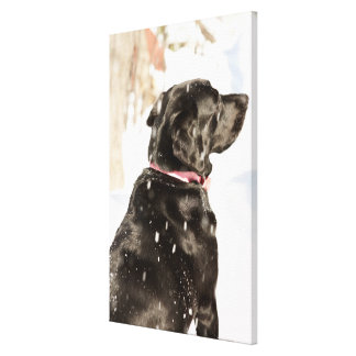 Dog in snow stretched canvas print