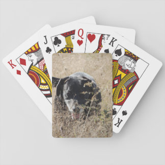 Dog in the field playing cards