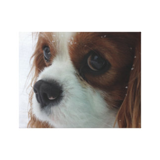 dog in the snow canvas prints