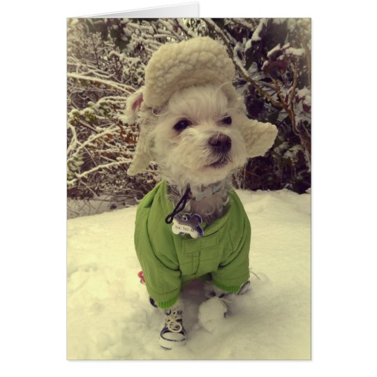 Dog in the snow card