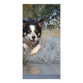 Dog in the Water Personalized Photo Card