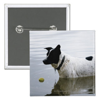 Dog in Water with Tennis Ball 15 Cm Square Badge