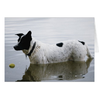 Dog in Water with Tennis Ball Card