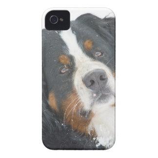 dog iPhone 4 case