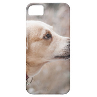 dog iPhone 5 cases