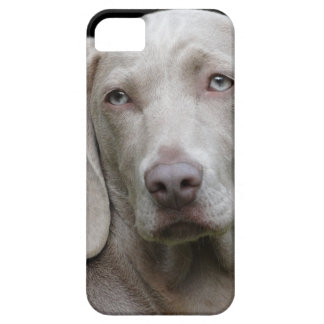 dog iPhone 5 cover