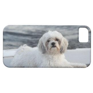 Dog laying by the water case for the iPhone 5