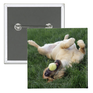 Dog laying upside down in grass with tennis ball 15 cm square badge