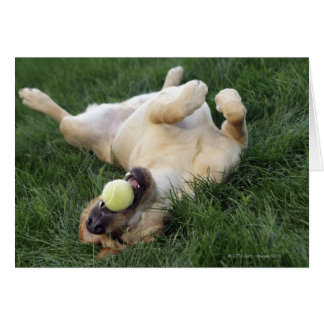 Dog laying upside down in grass with tennis ball card