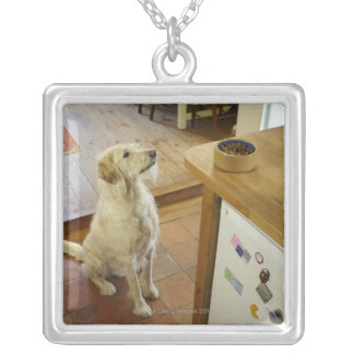 Dog looking at food on table. jewelry
