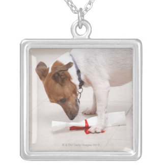 Dog looking down a diploma silver plated necklace