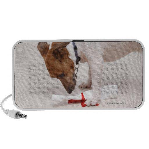 Dog looking down a diploma mini speaker