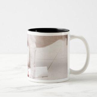 Dog looking down a diploma Two-Tone coffee mug