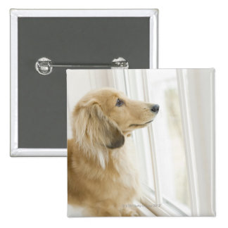 Dog looking out window 15 cm square badge