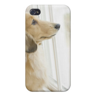 Dog looking out window cover for iPhone 4