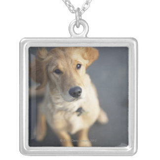 Dog looking up, close-up square pendant necklace