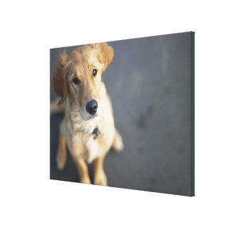 Dog looking up, close-up stretched canvas print