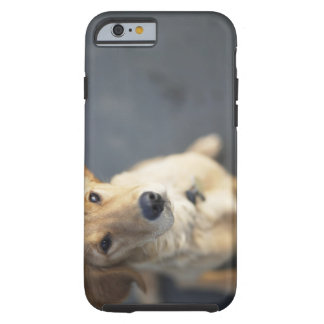 Dog looking up, close-up tough iPhone 6 case