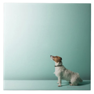 dog looking up into space tile
