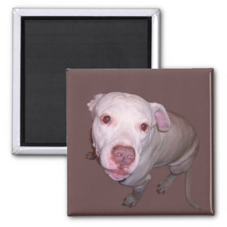 Dog looks at you square magnet