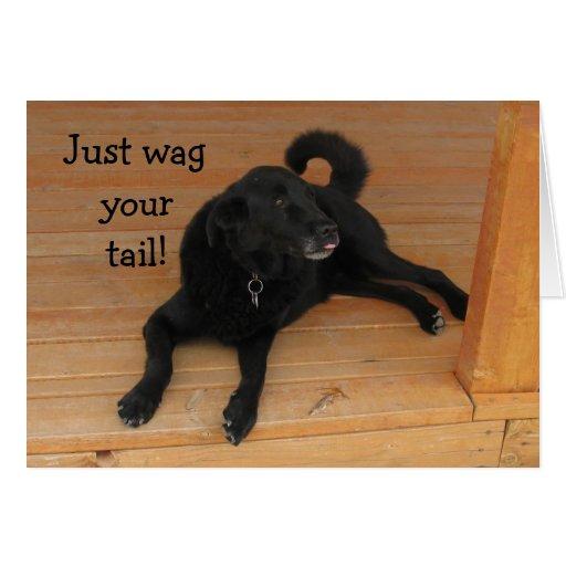 Dog Lover Belated Birthday Greeting Card