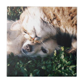 Dog Loves Kitty Small Square Tile