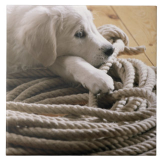 Dog lying with rope on wooden floor, elevated ceramic tile