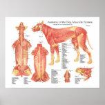 Dog Muscular Anatomy Poster Chart