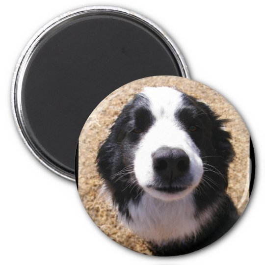 Dog Nose Photo Magnets