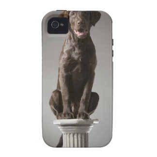 dog on a pedestal vibe iPhone 4 cases