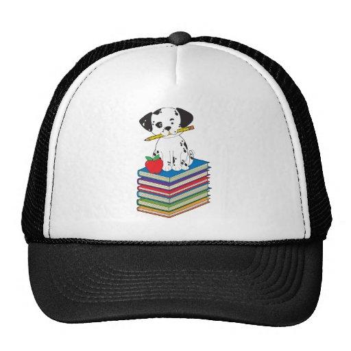Dog on Books Hat