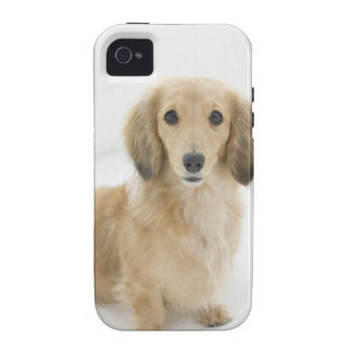 Dog on couch Case-Mate iPhone 4 case