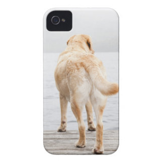 Dog on dock iPhone 4 Case-Mate case