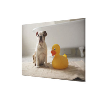 Dog on mat with plastic duck canvas prints