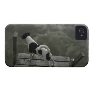 Dog on Top of Roof Case-Mate iPhone 4 Cases