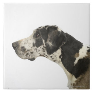Dog on White 11 Ceramic Tile
