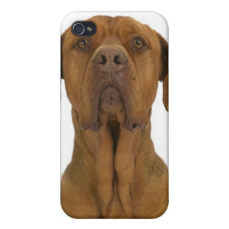 Dog on White 38 Case For The iPhone 4