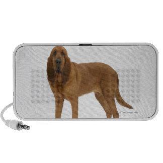 Dog on White 97 Speakers