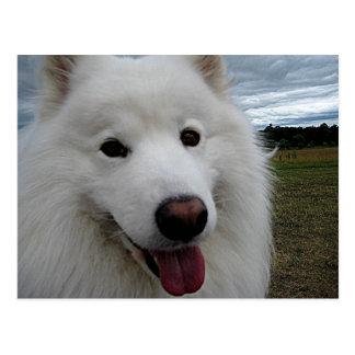 Dog Park Samoyed Postcard