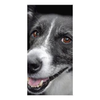 dog personalised photo card