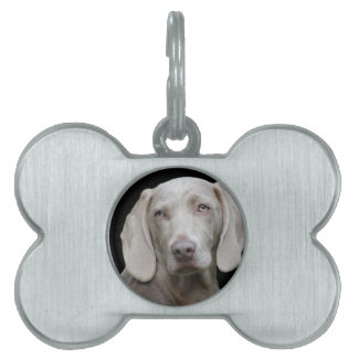 dog pet name tag