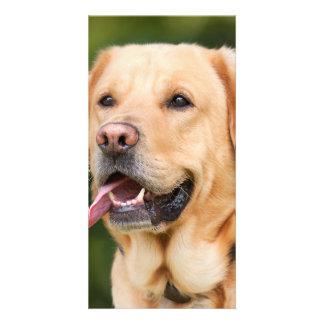 dog photo card