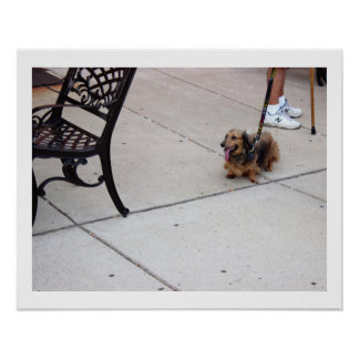 Dog Photo Poster