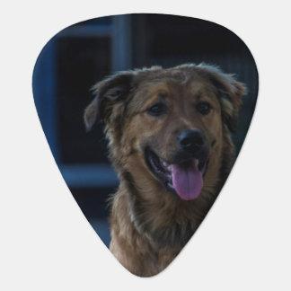 Dog pick